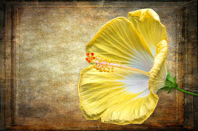 Photograph - Yellow Hibiscus by Garvin Hunter
