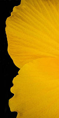 Photograph - Yellow Hibiscus Left Side Of Triptych by TK Goforth