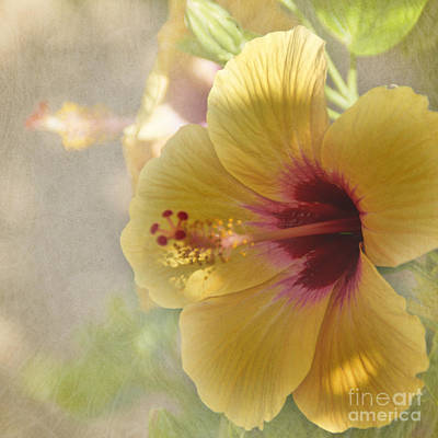 Peggy J Hughes Photograph - Yellow Hibiscus by Peggy Hughes