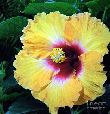 Photograph - Yellow Hibiscus by Renee Trenholm