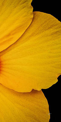 Photograph - Yellow Hibiscus Right Side Of Triptych by TK Goforth