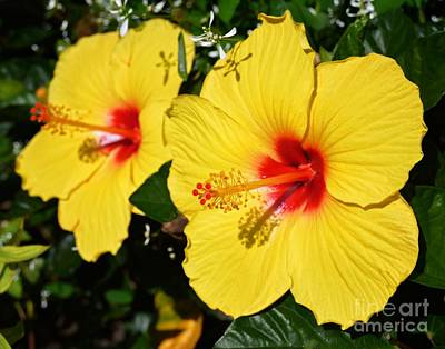 Photograph - Yellow Hibiscus by Sharon Woerner