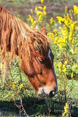 Photograph - Yellow Horse Treats by Adam Jewell