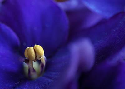 Violett Photograph - Yellow In A Sea Of Purplee by Christine Czernin Morzin
