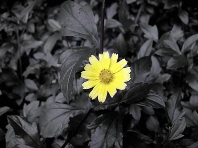 Photograph - Yellow In Black by Daniel Chowdhury