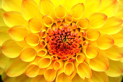 Photograph - Yellow In Circles by Emily Stauring