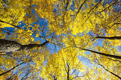 Photograph - Yellow In The Sky by Gej Jones