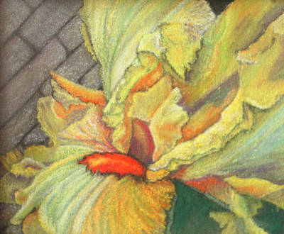 Pastel - Yellow Iris by Nila Jane Autry