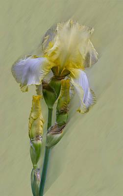 Photograph - xx  Yellow Iris by Patti Deters