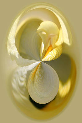Photograph - Yellow Iris Series 105 by Jim Baker
