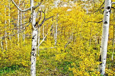 Fort Collins Photograph - Yellow by Baywest Imaging