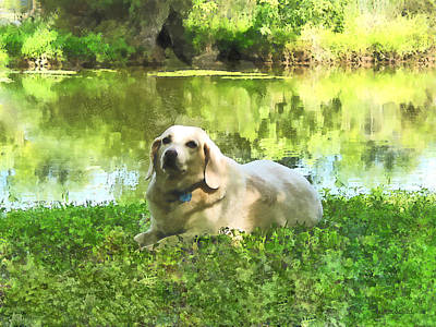 Photograph - Yellow Lab By Lake by Susan Savad