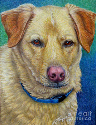 Fuqua - Artwork Drawing - Yellow Lab-colored Pencil by Beverly Fuqua
