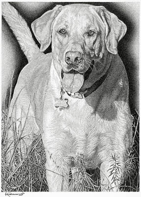 Drawing - Yellow Lab In The Field by Rob Christensen