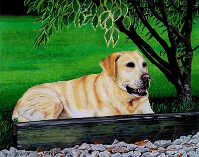 Chocolate Lab Drawing - Yellow Lab by Karen Rhodes