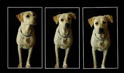 Photograph - Yellow Lab Love by Marisela Mungia