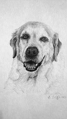 Drawing - Yellow Lab by Michelle Harrington