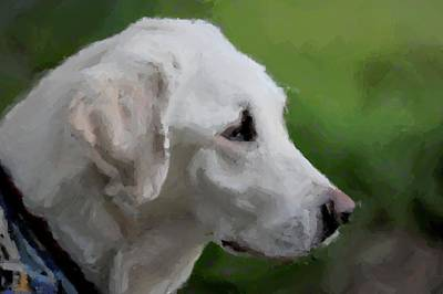 Photograph - Yellow Lab by Terry DeLuco