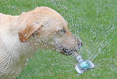 Photograph - Yellow Labrador Retriever Summer Fun by Jennie Marie Schell