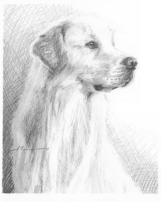 Yellow Labrador Show Dog Pencil Portrait Art Print by Mike Theuer