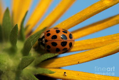 Art Print featuring the photograph Yellow Lady Bug - 5 by Kenny Glotfelty