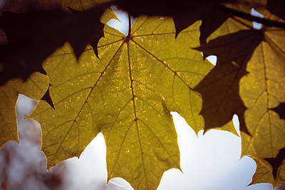 Photograph - Yellow Leaf Closeup by Vlad Baciu