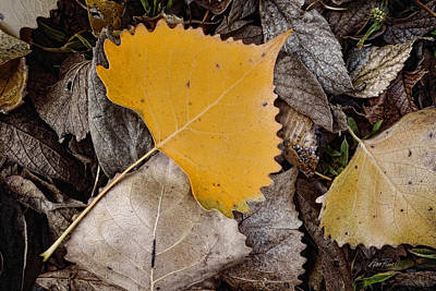 Photograph - Yellow Leaf - Nature Photograph by Ann Powell