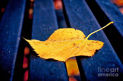 Photograph - Yellow Leaf On Bench II by Silvia Ganora