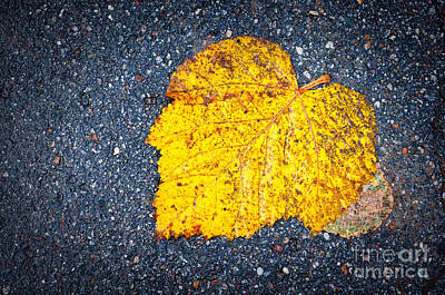 Photograph - Yellow Leaf On Ground by Silvia Ganora