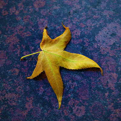 Photograph - Yellow Leaf On Marble by David Davies