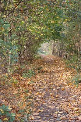 Yellow Leaf Road 7 Art Print