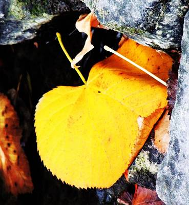 Photograph - Yellow Leaf by Todd Sherlock