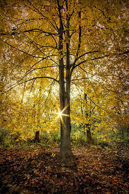 Laura James Photograph - Yellow Leaved Tree by Laura James