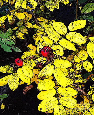 Photograph - Yellow Leaves And Red Berries by Ethna Gillespie