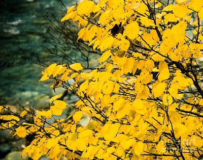 Winter And Autumn Landscape Photograph - Yellow Leaves By The Water by Sonja Quintero