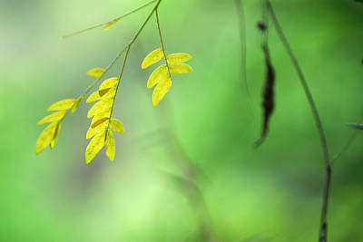 Yellow Leaves Art Print by Guido Montanes Castillo
