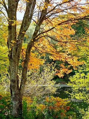 Art Print featuring the photograph Yellow Leaves by Janice Drew