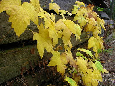 Photograph - Yellow Leaves by Leone Lund
