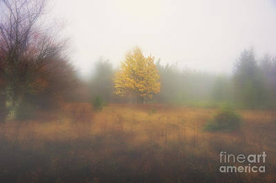 Yellow Leaves Of Tree In Fog At Dolly Sods Art Print by Dan Friend