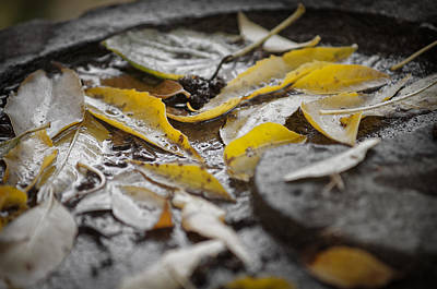 Photograph - Yellow Leaves On Stone by Chris Bordeleau