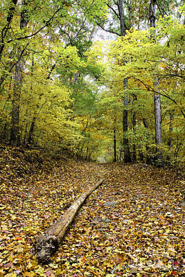 Photograph - Yellow Leaves On The Pinhoti Trail by Barbara Bowen