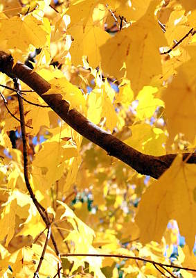 Yellow Leaves Art Print by Valentino Visentini