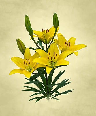 Photograph - Yellow Lilies by Jane McIlroy