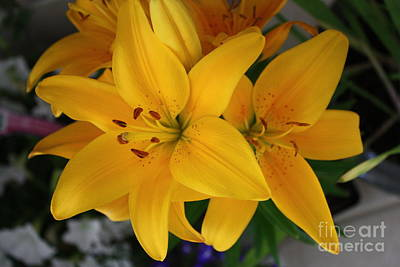 Photograph - Yellow Lilies by Terri Maddin-Miller