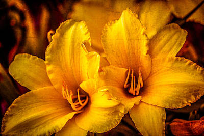 Photograph - Yellow Lillies by Connie Dye