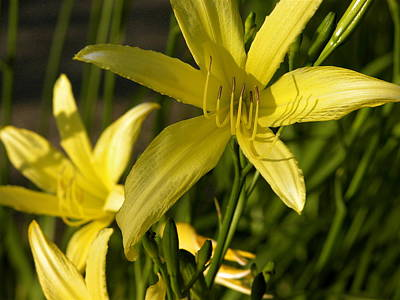 Valerie Paterson Wall Art - Photograph - Yellow Lily II by Valerie Paterson