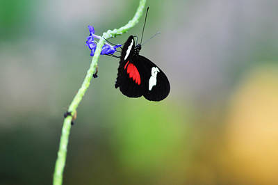 Animals Royalty-Free and Rights-Managed Images - Doris Longwing by Linda Kerkau