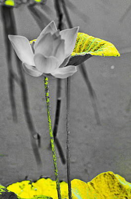 Photograph - Yellow Lotus Leaf by Chua  ChinLeng