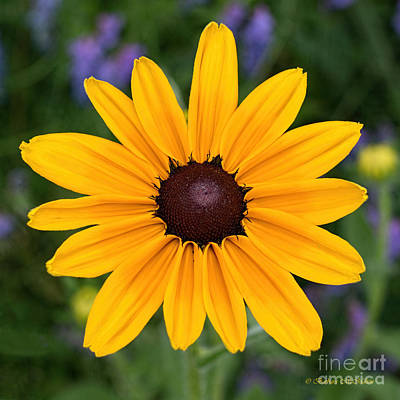 Sunflower Photograph - Yellow Makes Me Happy by Barbara McMahon