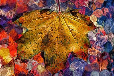 Photograph - Yellow Maple 2013 by Beth Akerman